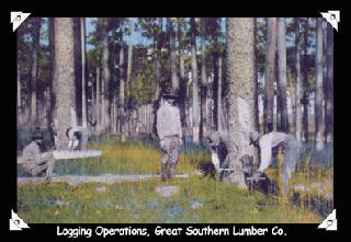 Logging Operations, Great Southern Lumber Co.