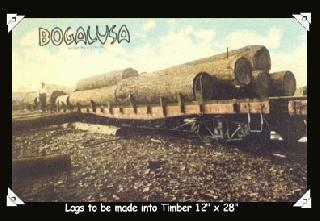 Logs to be made into Timber 12 inches x 28 inches
